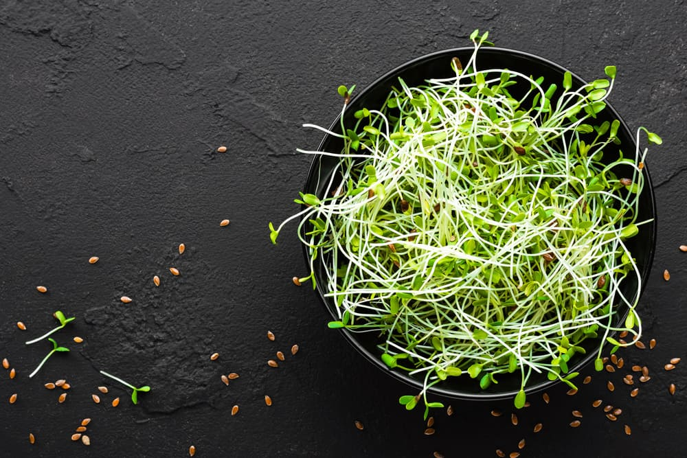 Sprouts – A True Superfood