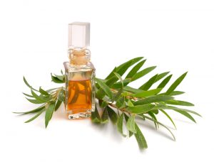 Uses and Benefits of Tea Tree Oil