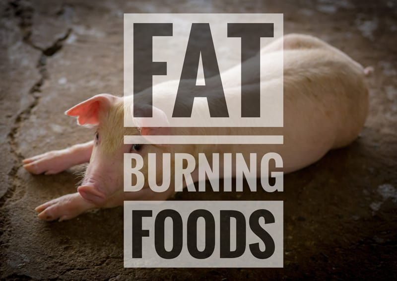 5 Foods That Help Burn Body Fat
