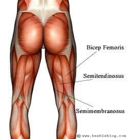 Total Gym Leg Workouts